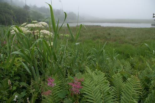 八島湿原池2.jpg