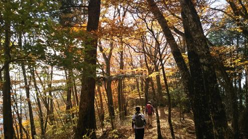 天子ヶ岳付近の紅葉.jpg