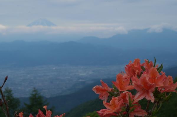 レンゲと富士山IMGP3689.jpg