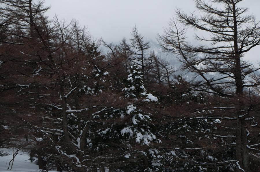 蛭ヶ岳方面IMGP1443.jpg